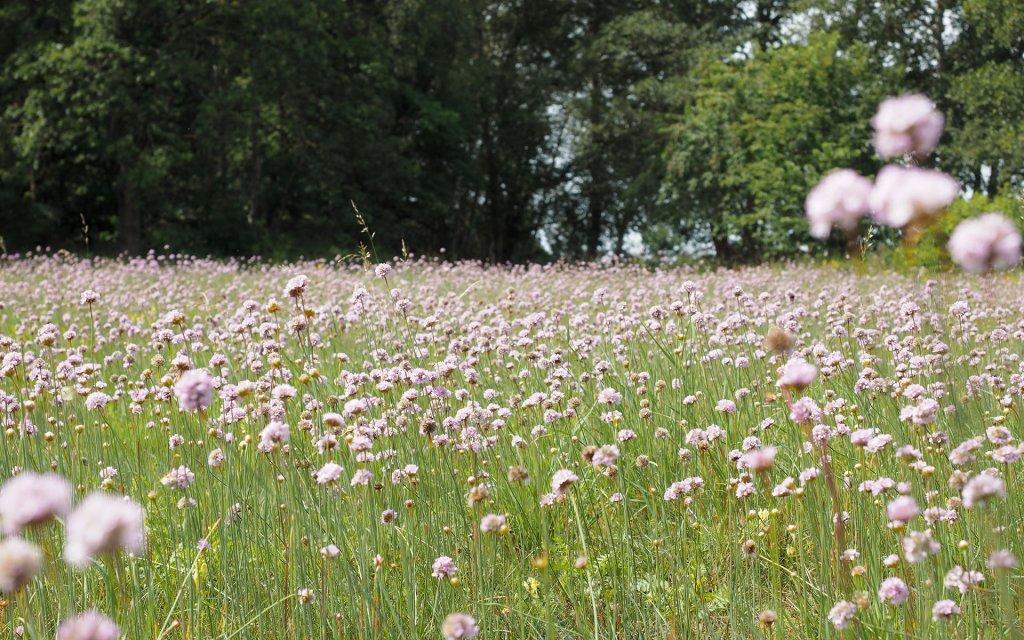 Blumenwiesen und Säume naturnah gestalten